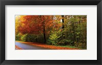 Framed Woods Wanderer 2