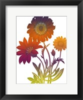 Framed Color Bloom 2
