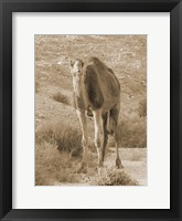 Framed Desert Runner 2