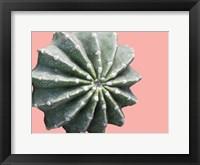 Framed Cactus Bulb