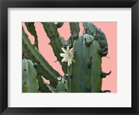 Framed Cactus Flower