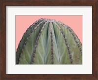 Framed Cactus Ball