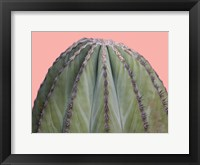 Framed Cactus Ball