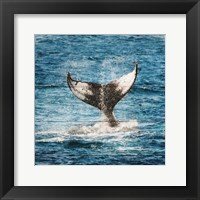 Framed Tail Of The Whale