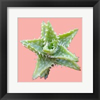 Framed Plant Life