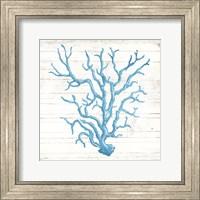 Framed Coral On Wood