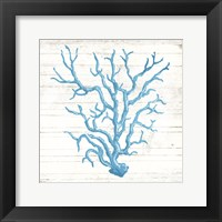 Framed Coral On Wood