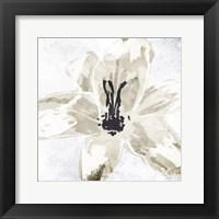 Framed Sketched Cream Flower