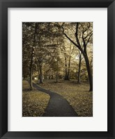 Framed Wooded Path