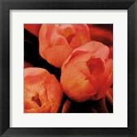 Framed Floral Spice