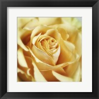 Framed Rose 2