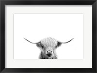 Framed Scottish Cow