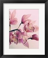 Framed Pink Orchids