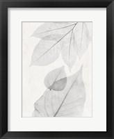 Framed Distilled Botanicals 2