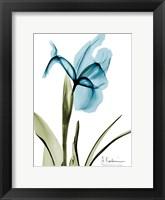 Framed Iris B76
