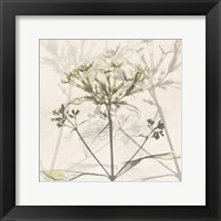 Framed Sunkissed Floral