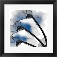 Framed Marvelous Cyclamen 1