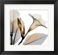 Framed Sunrise Mandelilla