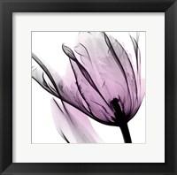 Framed Illuminated Tulip