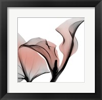 Framed Dawned Calla Lily