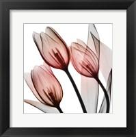 Framed Splendid Tulips