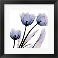 Framed Brilliant Night Tulips C68