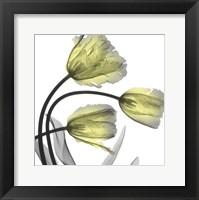 Framed Glorious Tulips