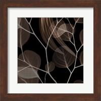 Framed Chocolate Eucalyptus 1