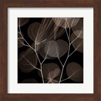 Framed Chocolate Eucalyptus 2