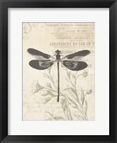Framed Lightened Vintage Insects