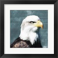 Framed Eagle Eye