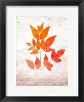 Framed Bold Foliage 2