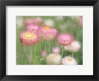 Framed Pink Wild