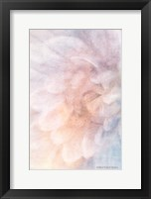 Framed Soft Dahlia Pastel Blue Lilac