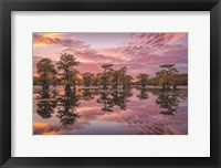 Framed Magnificent Sunset in the Swamps