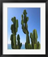 Framed Regal Cactus