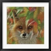Framed Autumn Red Fox