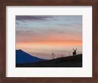 Framed Elkscape