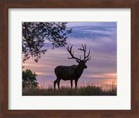 Framed Sunrise Bull