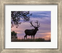 Framed Sunrise Bull