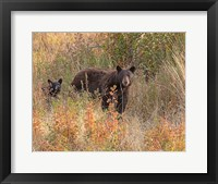Framed Black Bear Sow and Cub