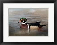 Framed Wood Duck