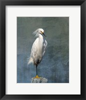 Framed Snow Egret