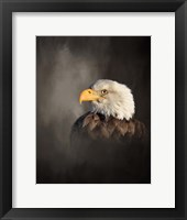 Framed Bald Eagle