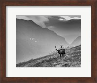 Framed Big Country Bull