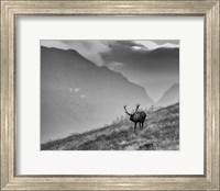 Framed Big Country Bull