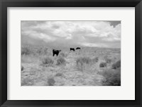 Framed Grazin on Grass