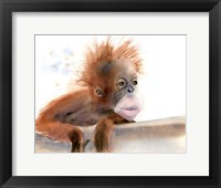Framed Baby Monkey