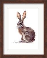 Framed Rabbit