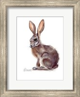 Framed Rabbit